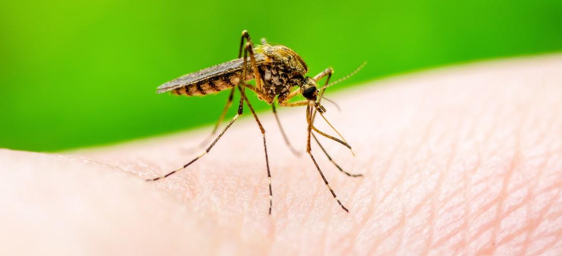 ¡Que el Dengue no se convierta en una alerta en salud!